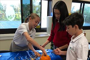 STEAM Pumpkin Observation in 6th Grade